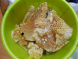 日本ミツバチ 蜜収穫