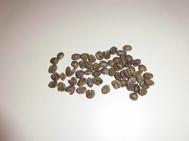 コーヒー豆の袋から生豆が 植えたら芽が出るかな